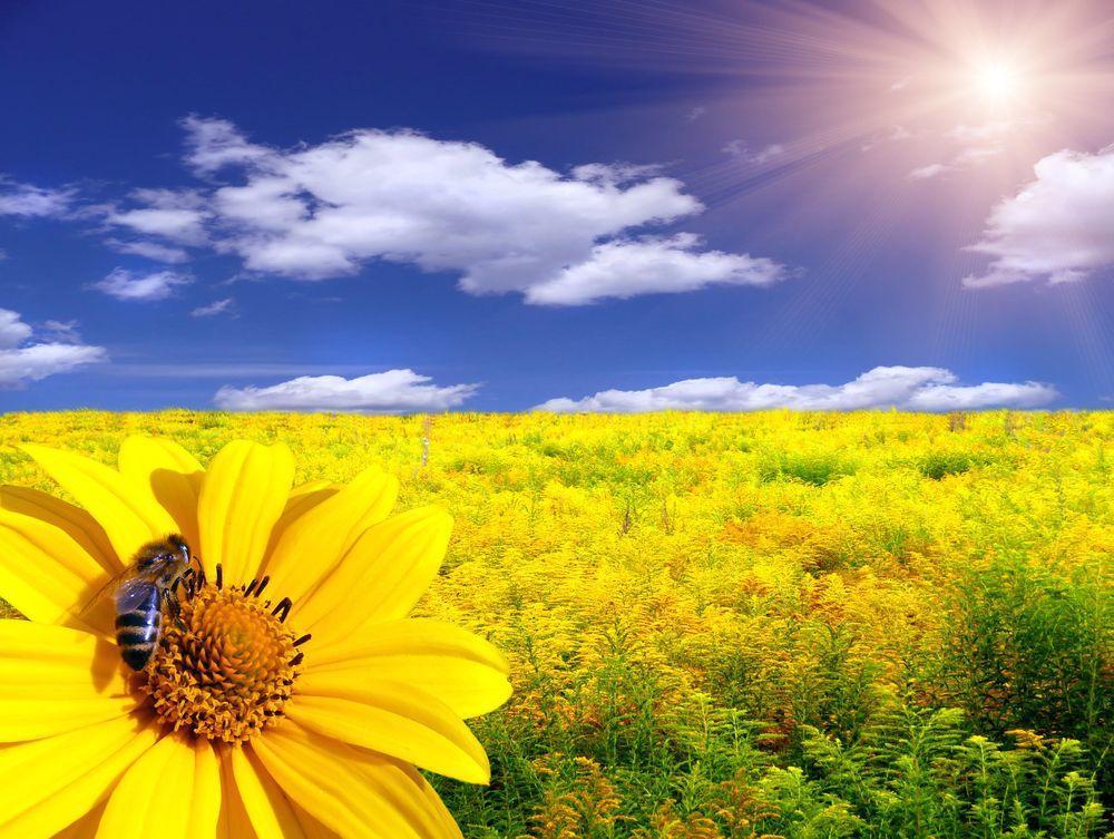 Sei Eine Woche Bienenkönig/in
