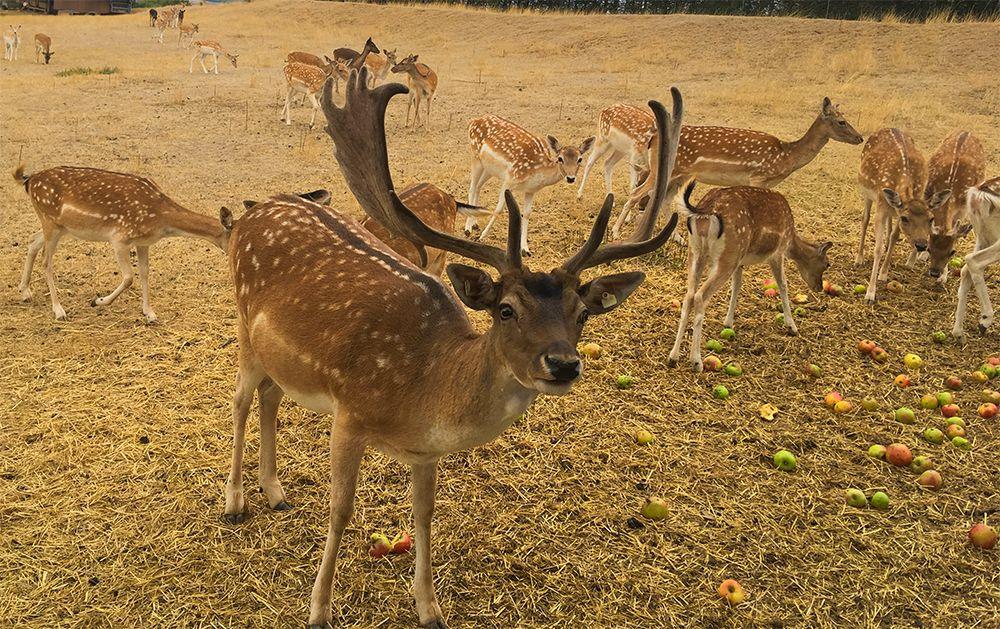 Familienhit im Lieblichen Taubertal mit Wildtierpark
